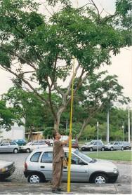 O plantio de árvores ou arvoretas em vias públicas torna-se, a cada dia, uma atividade rotineira, quer seja para a implantação da arborização ou para a substituição de indivíduos ou espécies