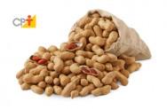 Produtor de amendoim pode ter receita de 14 mil reais em apenas um hectare