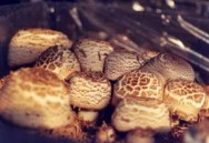A valorização do cogumelo brasileiro, no mercado, deve aumentar.