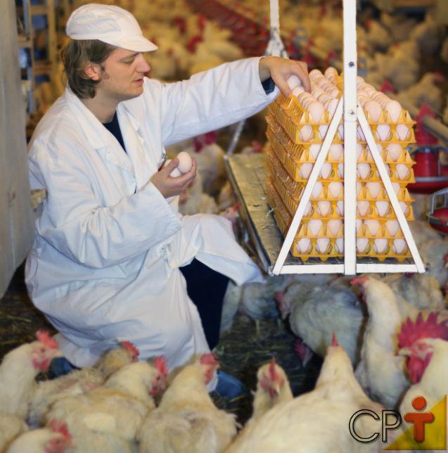 Aumente sua renda com a criação de galinhas poedeiras   Artigos Cursos CPT