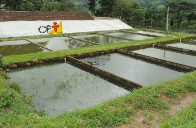 Como construir e abastecer tanques de peixes   Artigos Cursos CPT