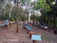 apiário