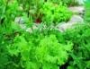 Plano Safra tem na sustentabilidade da agricultura uma de suas metas