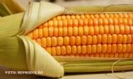 Milho:  produto agrícola de distribuição mundial