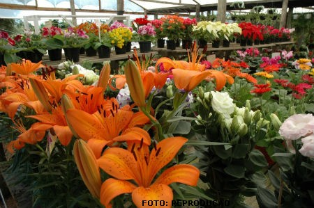 Viveiro de plantas ornamentais um empreendimento de for Plantas decorativas amazon