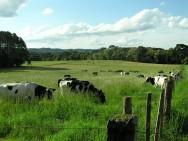 Aprenda Fácil Editora: Pastoreio Racional Voisin Recupera Pastagens Degradadas