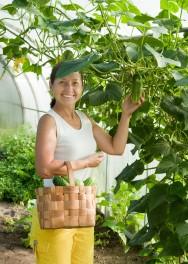 Crie a sua própria horta e tenha uma vida saudável