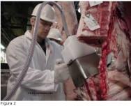 Conheça a importância da avaliação e tipificação de carcaças bovinas