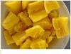 Embrapa  apresenta novas cultivares de mandioca amarela