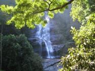 Aprenda Fácil Editora: Floresta da Tijuca É a Maior Floresta Urbana do Mundo