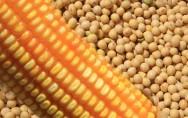 Soja e milho sustentam balança comercial