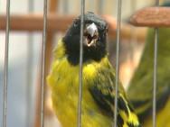 Aprenda Fácil Editora: Projeto Alia Preservação de Aves e Ecoturismo