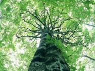 Aprenda Fácil Editora: Capital Brasileira Menos Arborizada Ainda Possui Árvores Nativas na  Área Urbana