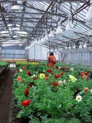 Aprenda Fácil Editora: Setor de Flores e Plantas Ornamentais Tem Bom Faturamento