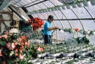 Aprenda Fácil Editora: Projeto do SEBRAE Propõe Plano de Marketing para o Setor de Flores e Plantas Ornamentais