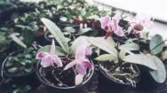 Aprenda Fácil Editora: Crescimento do Agronegócio de Flores e Plantas Ornamentais Incentiva Produtores