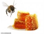 Processamento de mel puro e composto: um investimento de lucro certo