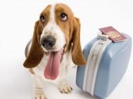 Cuidados com os animais de estimação nas férias
