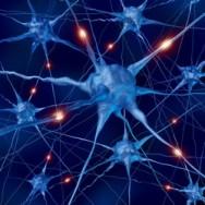 Aprenda Fácil Editora: Grupo de Neurônios que Controla a Memória É Identificado