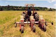 Plantio direto: manejo da fertilidade do solo