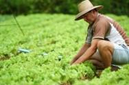 Aprenda Fácil Editora: Família Orgânica incentiva consumo de alimentos agroecológicos