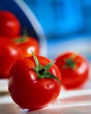 Aprenda Fácil Editora: Técnica de irrigação reduz em 30% aplicação de defensivos na lavoura de tomate