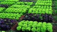 Aprenda Fácil Editora: Mato Grosso e Pará têm as maiores áreas de orgânicos do país
