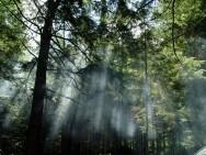 Aprenda Fácil Editora: Brasil é vice-líder em área florestal no planeta