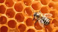 Aprenda Fácil Editora: Estação chuvosa altera práticas de manejo na apicultura