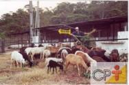 Como tornar seu sítio lucrativo: ovinocultura