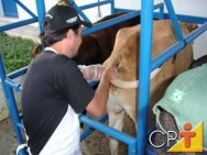Como tornar seu sítio lucrativo: sistemas de monta dos ovinos