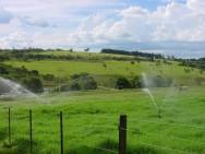 Aprenda Fácil Editora: Produção leiteira mostra benefícios da pastagem irrigada a produtores