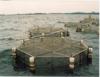 Criação de peixes no cultivo superintensivo em tanques-rede