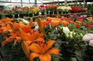 Aprenda Fácil Editora: Apoio do MAPA incentiva o setor de flores e apoia os produtores locais nos seus negócios