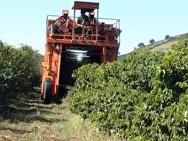 Aprenda Fácil Editora: Produtividade cafeeira em regiões de produção mecanizada é 28% superior