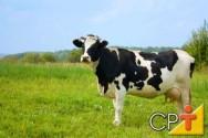 O segredo da alta produtividade leiteira: manejo de vacas secas