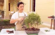 Criação de bonsai