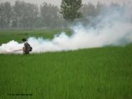 Pulverização agrícola: saiba mais sobre esse método de controle de pragas e doenças