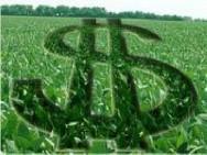 Aprenda Fácil Editora: Estado tem a maior renda agrícola do Brasil