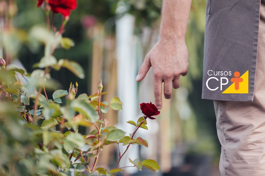 Cultivo de rosas: bons tratos culturais garantem sucesso da produção   Artigos CPT