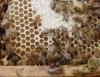 Proteja seu apiário de perdas no inverno