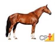 Como comprar cavalos: características desejáveis