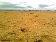 Degradação de pastagens - conheça as principais causas
