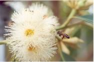A apicultura migratória é o manejo mais indicado para a máxima produção de mel.