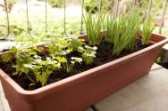 Aprenda Fácil Editora: Como iniciar uma horta doméstica?