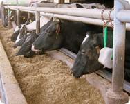 Aprenda Fácil Editora: Formulação de ração para vacas leiteiras