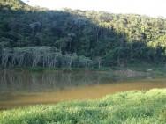 Projeto de restauração florestal - como fazer e quais as técnicas do procedimento