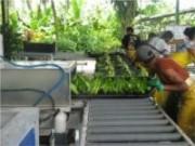 Como controlar a quantidade de produção na propriedade rural