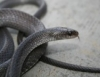 Tudo sobre criação de serpentes