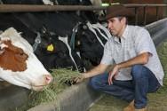 Vacas leiteiras - volumosos e concentrados na alimentação aumentam a produção